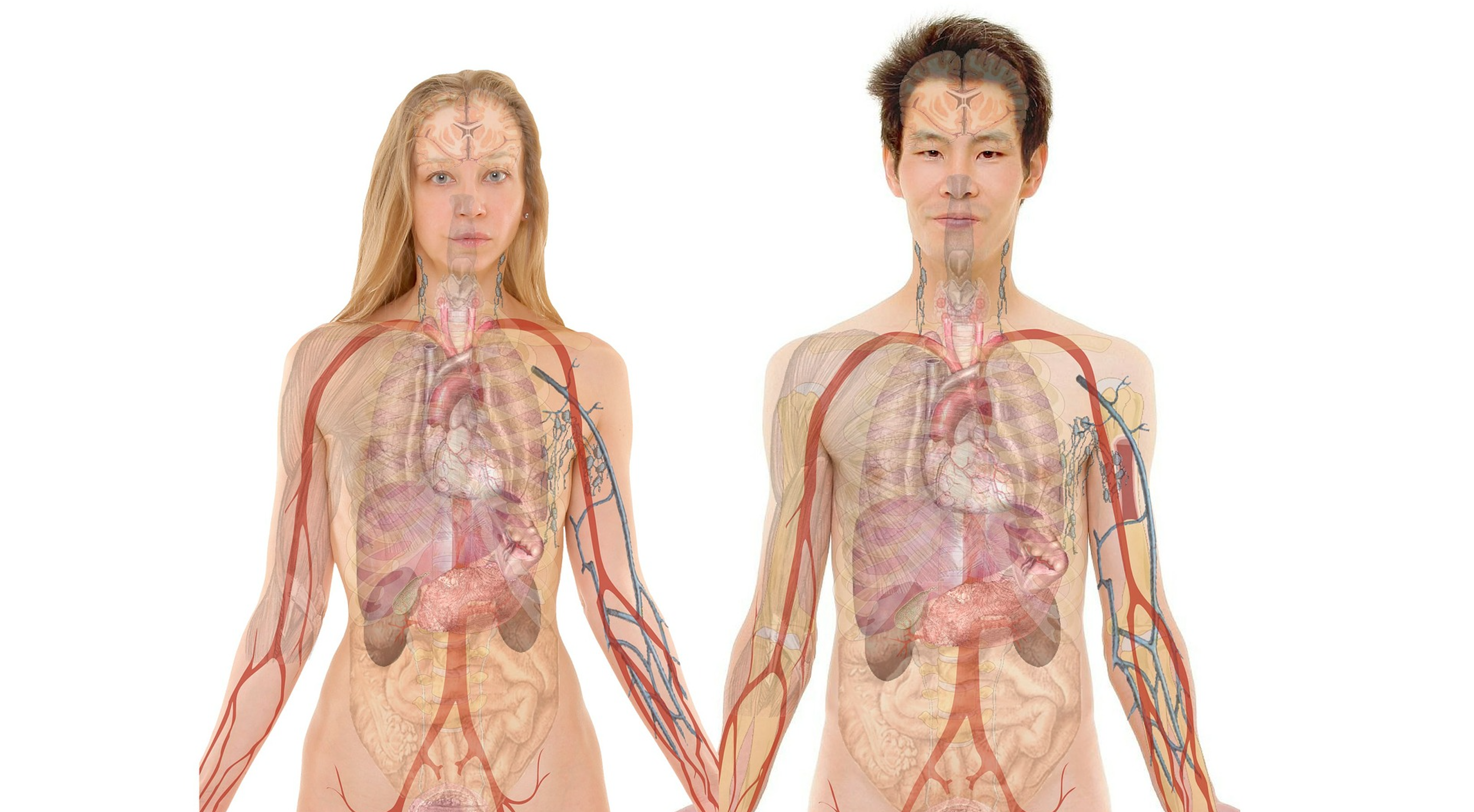Human Kidneys